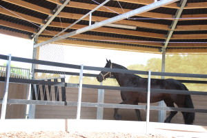 Covered horse walker