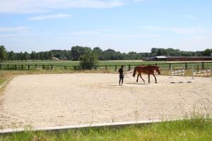 Longeing Arenas - Stal De Roost